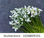 snowdrop flowers on sand... | Shutterstock . vector #1028809231