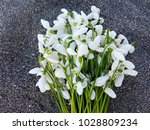 snowdrop flowers on sand... | Shutterstock . vector #1028809234