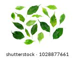 leaf isolated on white | Shutterstock . vector #1028877661