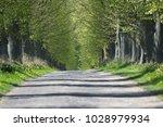 horizontal telephoto shot of... | Shutterstock . vector #1028979934