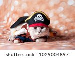 Stock photo the funny cat masked 1029004897