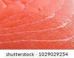 fresh salmon fillet | Shutterstock . vector #1029029254