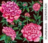 pink peonies hand painted.... | Shutterstock . vector #1029045424