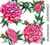 peonies flowers design oil... | Shutterstock . vector #1029045427