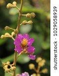 close up of purple flower in...   Shutterstock . vector #1029058939