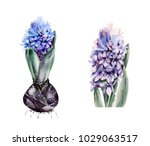 watercolor set of blue and... | Shutterstock . vector #1029063517