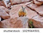 Small photo of Plains viscacha, Altiplano Plateau, Bolivia