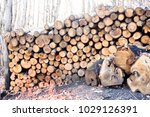 Small photo of Firewood is any wooden material that is gathered and used for fuel Firewood is a renewable resource. However, demand for this fuel can outpace its ability to regenerate on a local or regional level.