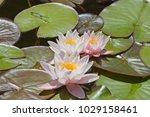 the queen of the pond  ... | Shutterstock . vector #1029158461
