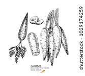 hand drawn set of farm... | Shutterstock . vector #1029174259