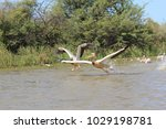 djoudj national bird sanctuary  ... | Shutterstock . vector #1029198781