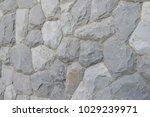 iguana on the ground in dark... | Shutterstock . vector #1029239971