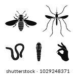 worm  centipede  wasp  bee ...