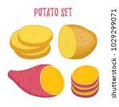 vector set of potato. violet... | Shutterstock .eps vector #1029299071