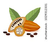 cacao fruit  raw cacao beans... | Shutterstock .eps vector #1029312331