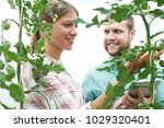 agricultural workers checking...   Shutterstock . vector #1029320401