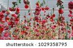 wedding ceremony decoration... | Shutterstock . vector #1029358795