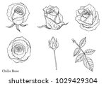 rose vector set by hand drawing. | Shutterstock .eps vector #1029429304