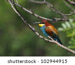 european bee eater with green... | Shutterstock . vector #102944915