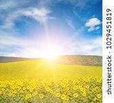sun above sunflower field. copy ...   Shutterstock . vector #1029451819