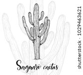 hand drawn saguaro cactus ... | Shutterstock .eps vector #1029463621