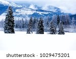 winter evergreens with snowy... | Shutterstock . vector #1029475201