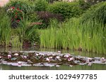 summer  in the garden near the... | Shutterstock . vector #1029497785