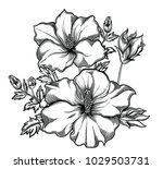 blooming flowers   detailed... | Shutterstock .eps vector #1029503731
