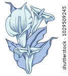 hand drawn blue blooming callas ... | Shutterstock .eps vector #1029509245