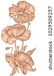 hand drawn blooming nude poppy...   Shutterstock .eps vector #1029509257