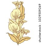 hand drawn blooming callas... | Shutterstock .eps vector #1029509269