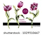 striped tulips isolated on... | Shutterstock .eps vector #1029510667