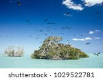 Frigate Birds Fly Around Green...