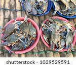 fresh crabs at the market in... | Shutterstock . vector #1029529591