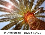tropical palm tree and sunshine ...   Shutterstock . vector #1029541429
