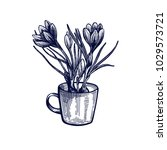 crocus hand drawn isolated... | Shutterstock .eps vector #1029573721