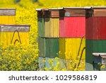 beehife on rape field abstract... | Shutterstock . vector #1029586819