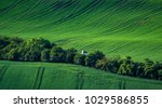 green spring sown field... | Shutterstock . vector #1029586855