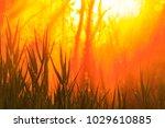 sunrise over lake   nature... | Shutterstock . vector #1029610885