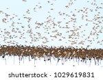 flock of beautiful birds flying ... | Shutterstock . vector #1029619831