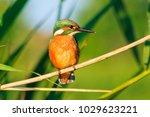 beautiful colored bird sitting... | Shutterstock . vector #1029623221