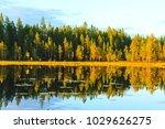 beautiful pristine forest in... | Shutterstock . vector #1029626275