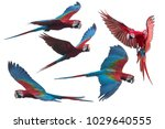 red and green macaw flying... | Shutterstock . vector #1029640555