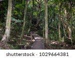 new zealand boardwalk nature... | Shutterstock . vector #1029664381
