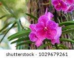 orchid flower. royalty high...   Shutterstock . vector #1029679261