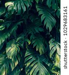 tropical jungle foliage   dark... | Shutterstock . vector #1029683161
