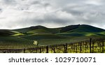 the rolling green vineyards of... | Shutterstock . vector #1029710071