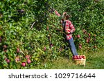 boy picks apples in the orchard.... | Shutterstock . vector #1029716644