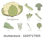 illustration of different kinds ... | Shutterstock . vector #1029717505
