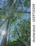 tall trees rising skyward... | Shutterstock . vector #1029725209